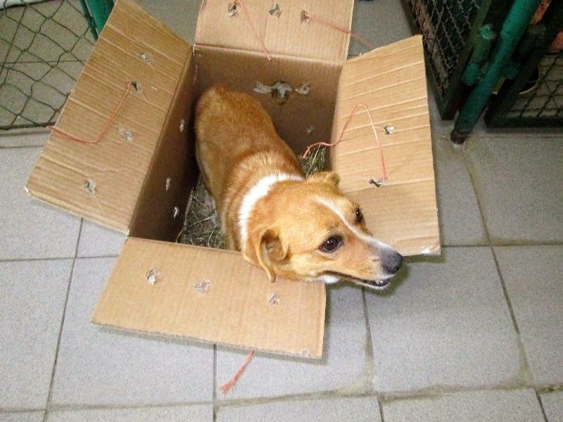 Do schroniska trafiła paczka z listem. W środku zamknięty był pies