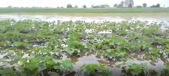 Rolnicy poszkodowani przez nawałnice mogą ubiegać się o oszacowanie strat